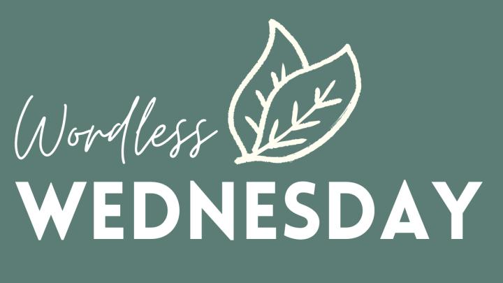 Wordless Wednesday: ElmwoodVillage